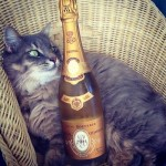 The Rich Cats Of Instagram : Les chats luxueux d'Instagram