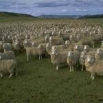 Aïd 2.0, votre mouton en ligne