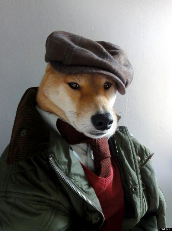 Stylish Menswear Dogs