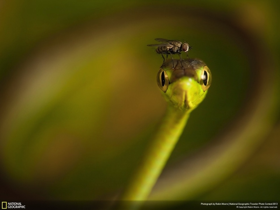 National-Geographic-Traveler-3