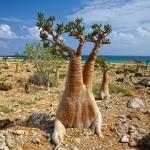 Socotra, la première île extraterrestre… terrestre