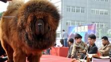 Le chien qui vaut 1,4 million d'euros