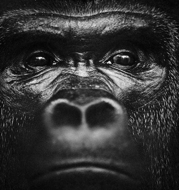 Ape-BAHEUX-0299_resultat