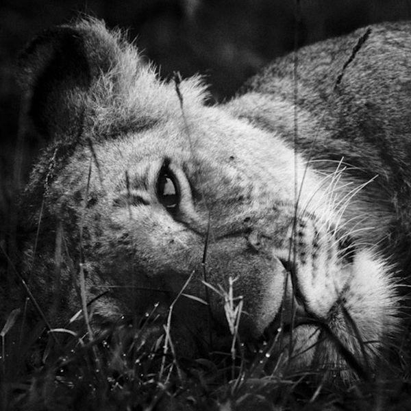 LION-BAHEUX-1364_resultat