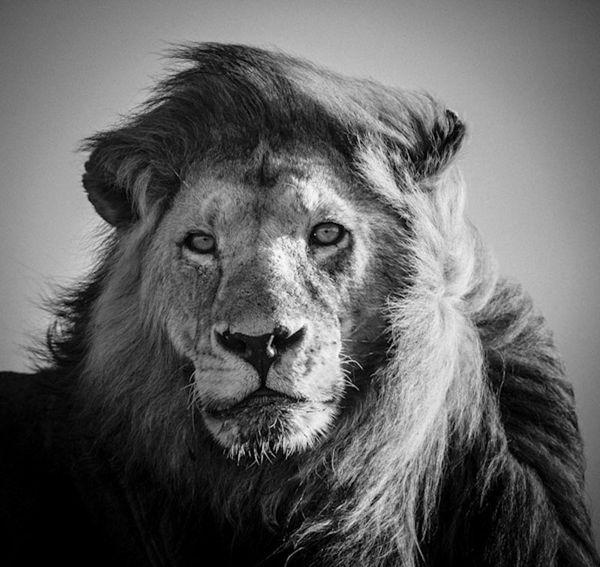 LION-BAHEUX-5214_resultat