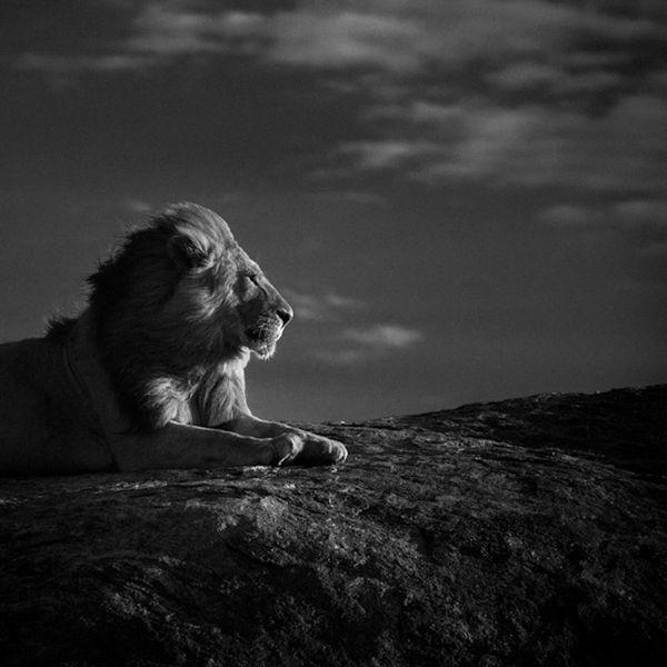 LION-BAHEUX-5243_resultat