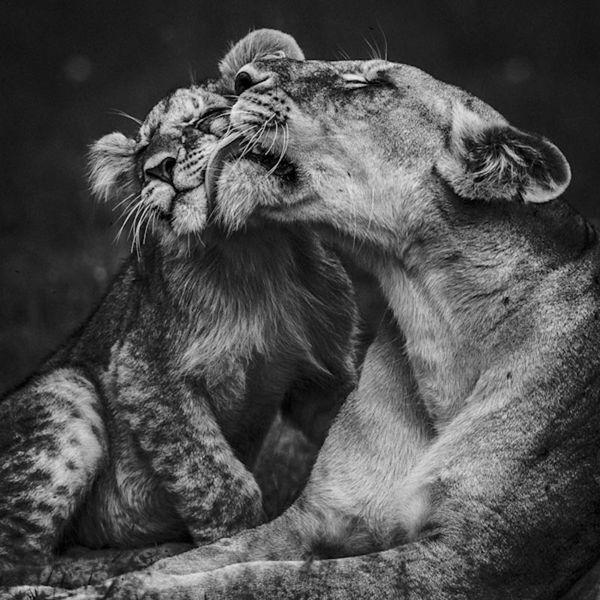 LION-BAHEUX-5488_resultat