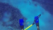 Attaque d'un requin filmée en GoPro