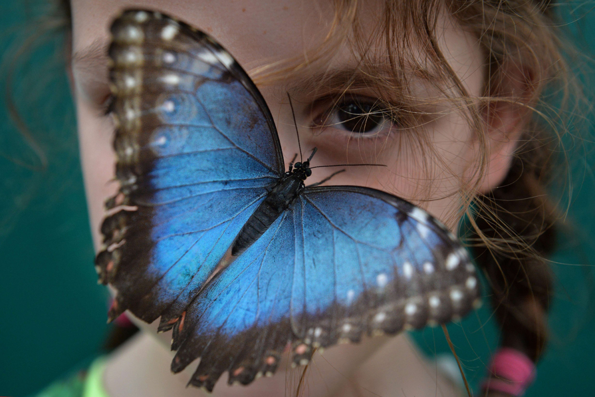 BRITAIN-ANIMAL-BUTTERFLY