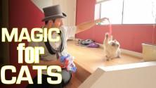 Il fait des tours de magie à des chats