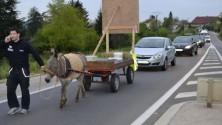 Privé de son permis, il part travailler avec un âne