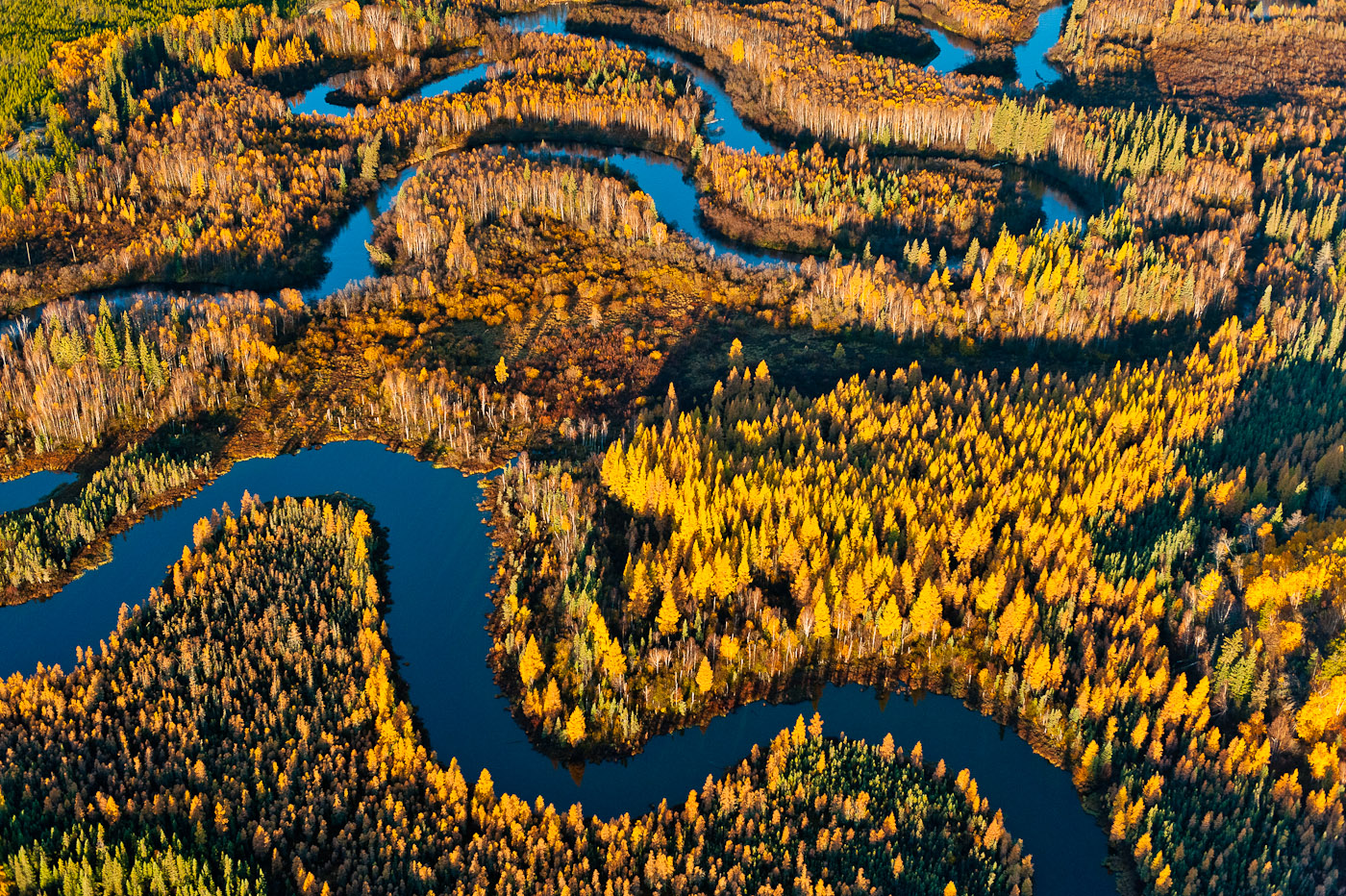 Boreal forest and wetland, Peace Athabasca Delta.