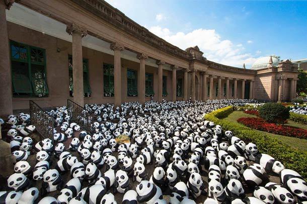 1600-Panda-5