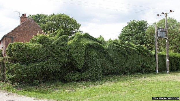 Un retrait taille une haie en un dragon g ant welovebuzz for Haie jardin anglais