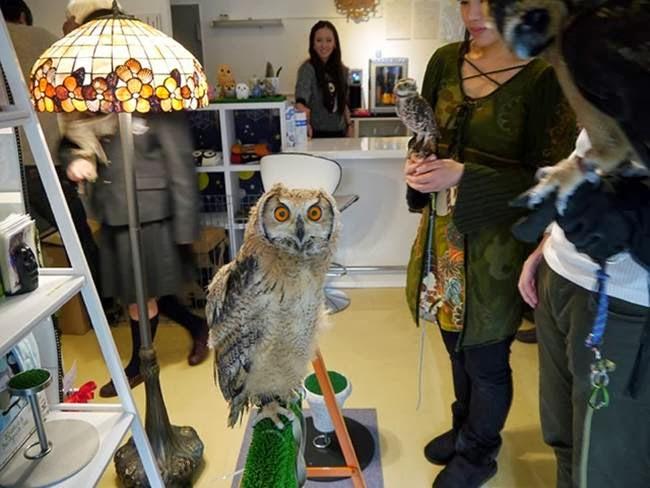 Owl-Cafe-In-Japan-010