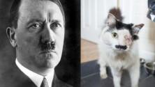 Un chat violenté car il ressemble à Hitler