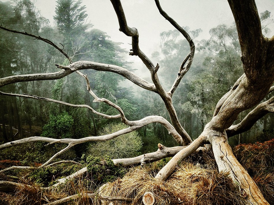 best-photo-of-trees-aaron-pike-of-san-francisco-calif
