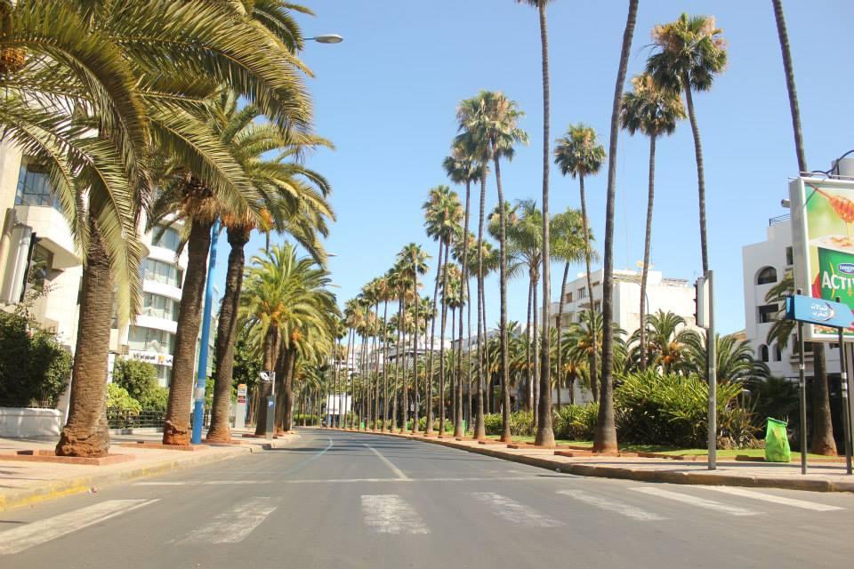 casablanca-palmiers