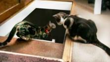 Les chats sont des êtres fous !