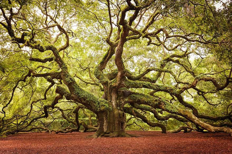arbre 10