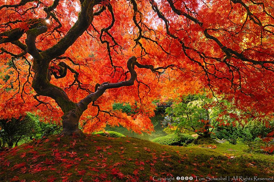 arbre 2
