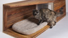 De luxueuses maisons d'architectes pour chats