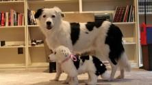 Votre animal de compagnie est mort ? Cuddle Clones le reproduit en peluche !