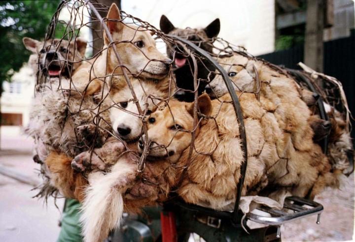 dog-in-a-net1