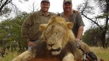 Un riche dentiste américain tue un lion au Zimbabwe pour le plaisir