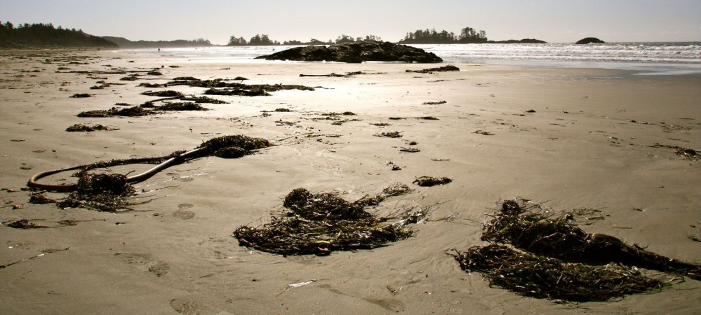 seaweed_at_long_beach_by_maplemusketeer-d427h3x