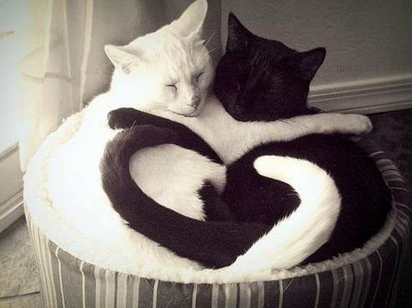 Black-and-whtie-cat-heart-tail