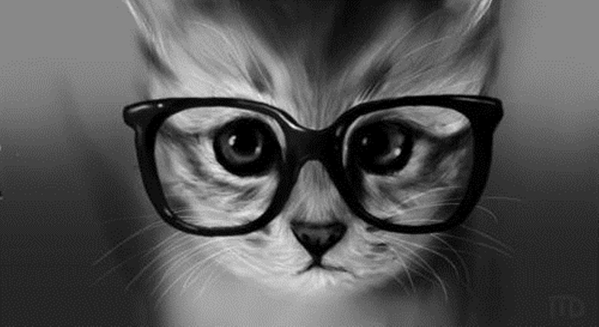 Funny-Cat-Glasses-Wallpaper