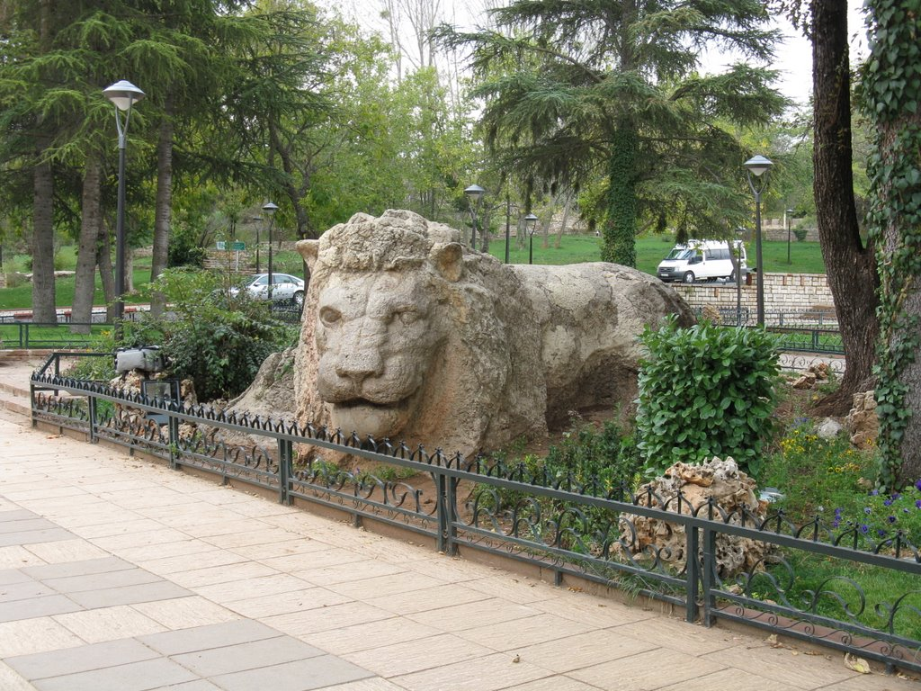 Lion_d_Ifrane