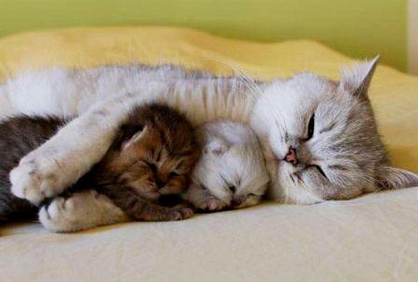 cat-hugging-kitens