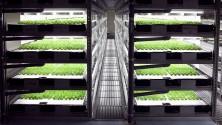 Une ferme entièrement robotisée au Japon pour 2017