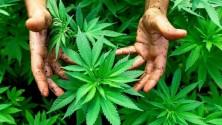 J'imagine mon Maroc : Et si on légalisait le cannabis ?