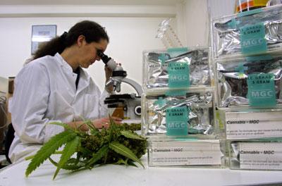 medical-marijuana-lab