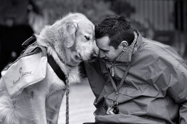 6356276037486661751599147739_A-guide-dog-and-his-master-have-a-touching-moment