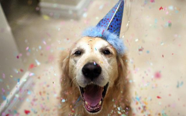 dog-birthday