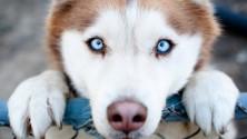 7 bonnes raisons d'avoir un chien comme animal de compagnie