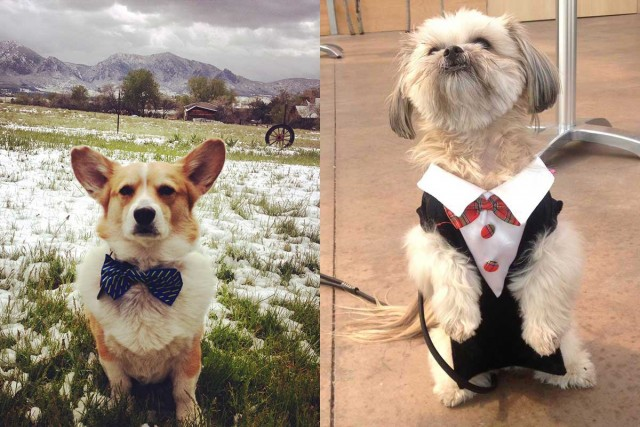 wedding-dog-attire