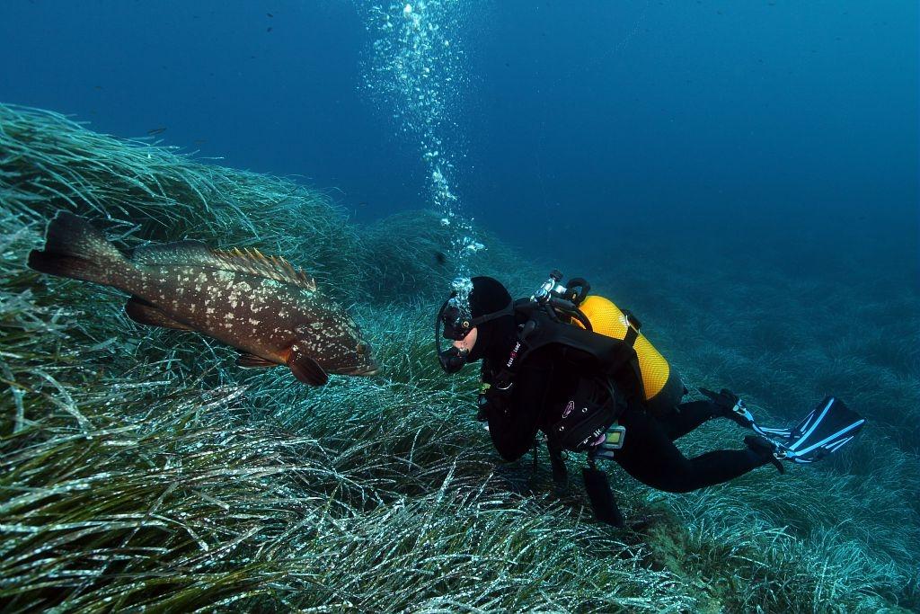 Plongee-sous-marine-2