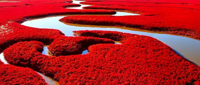 Red-Beach-panjin-4