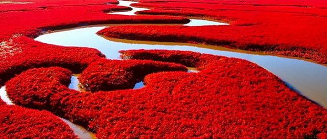 Red-Beach-panjin-4