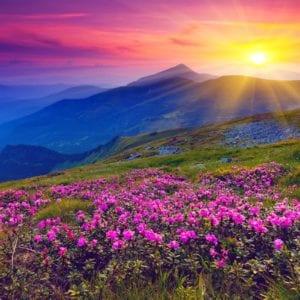 Toutes les fleurs du monde n\'égaleront jamais sa beauté