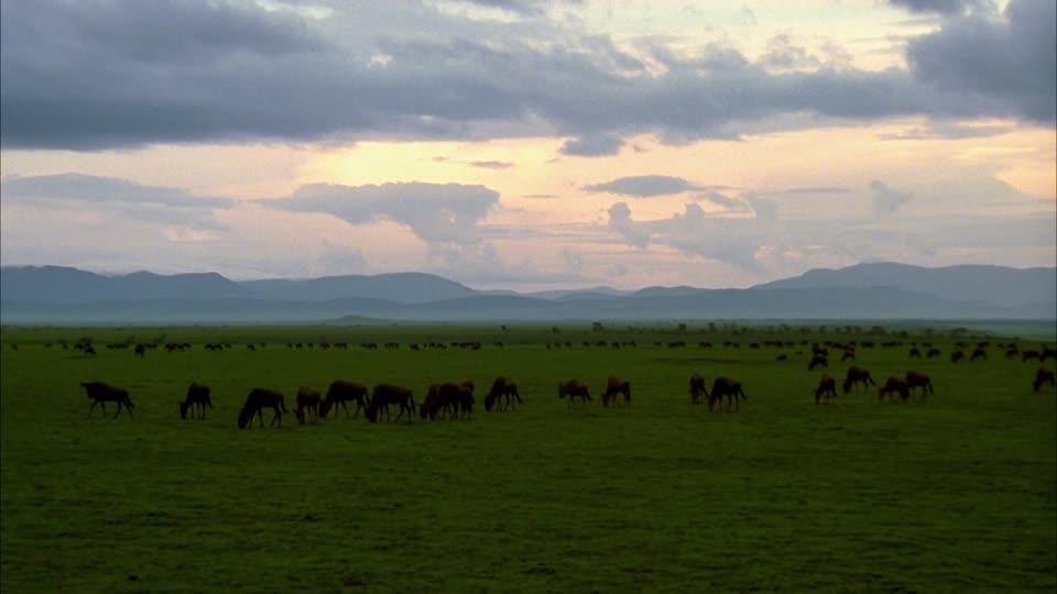 844035649-aire-de-conservation-du-ngorongoro-district-de-ngorongoro-troupeau-de-gnous-plaine