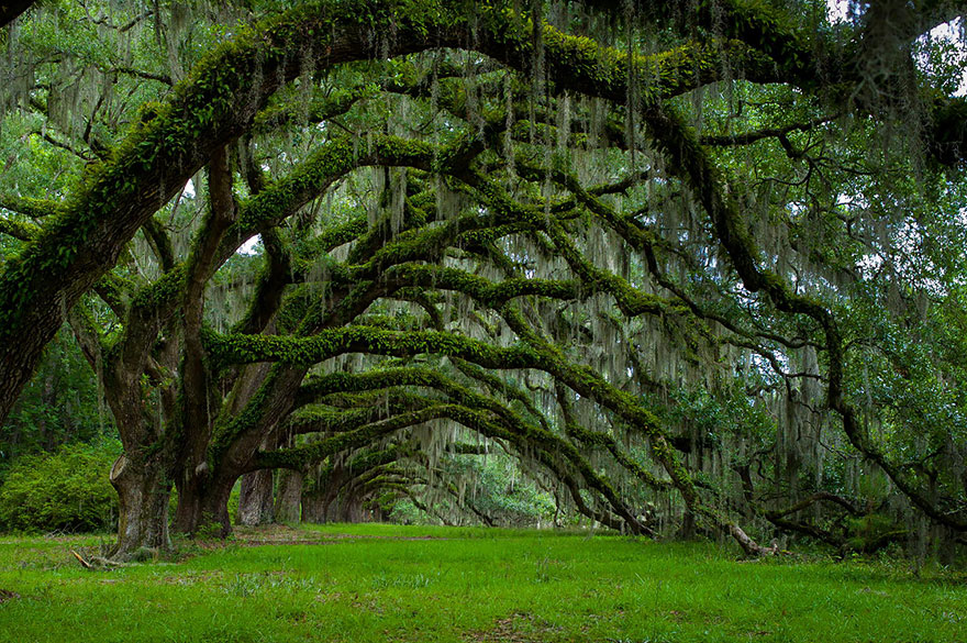 avenue-of-oaks-at-dixie-plantation-in-south-carolina