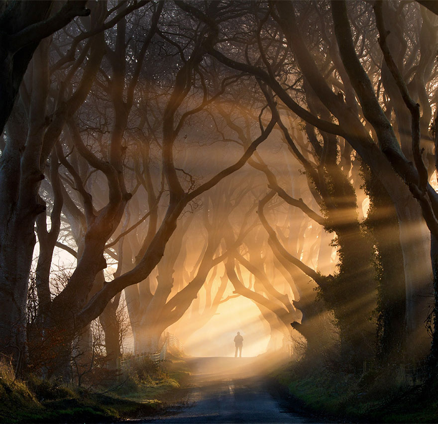 the-dark-hedges-in-northern-ireland