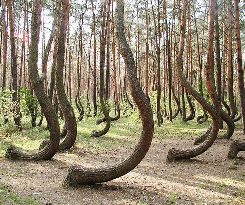 hoia-baciu-forest-roumanie