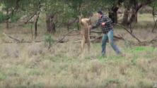Il donne un coup de poing à ce kangourou pour défendre son chien